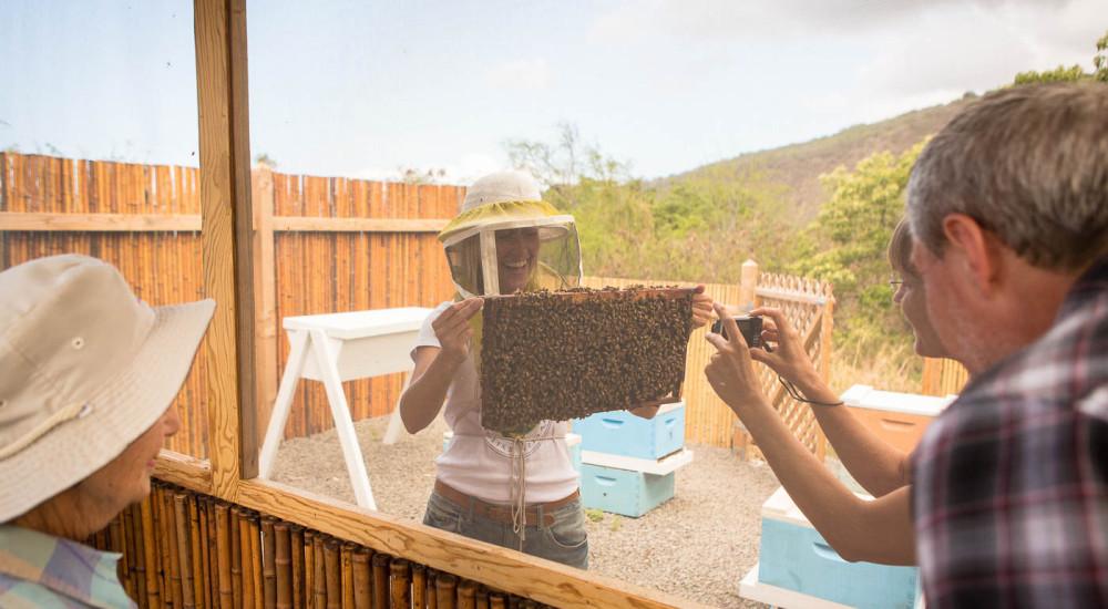 KonaFarm-photo Tour Looking Through Screen At Bees Jcpg