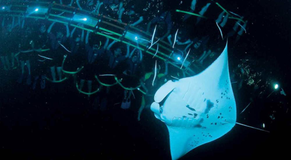 Manta-night-dive-with-mantas