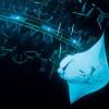 Manta Night Dive With Mantas